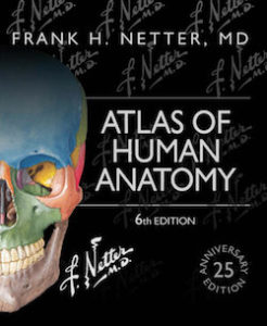 Download Atlas of Human Anatomy, Sixth Edition - Frank Netter